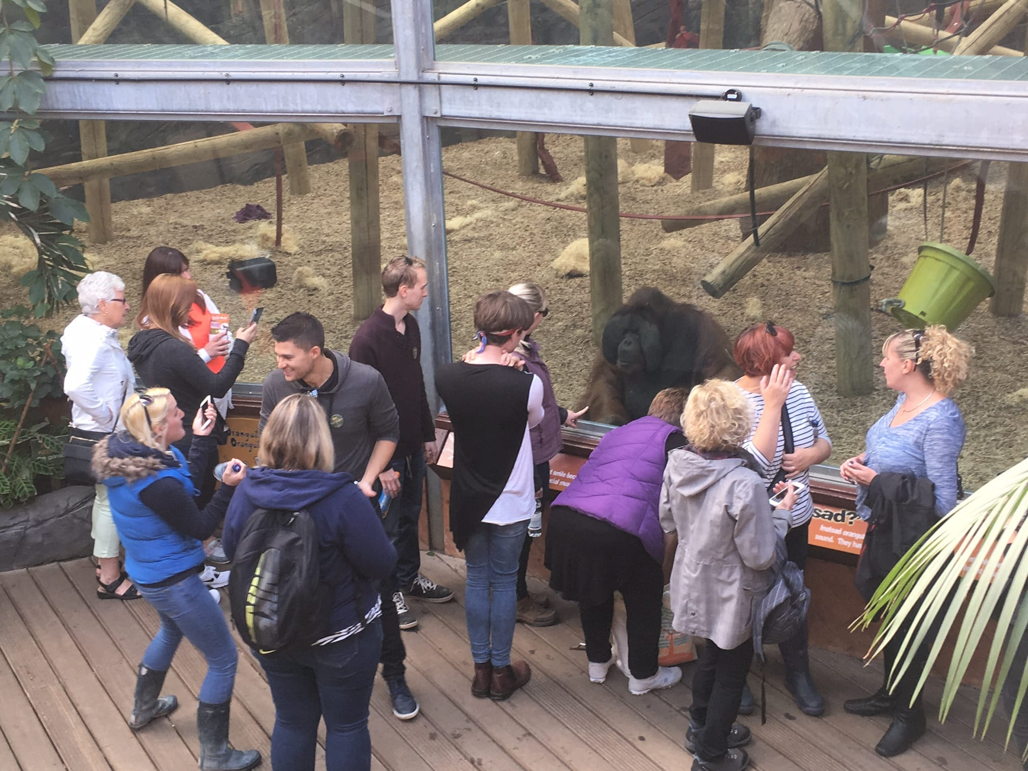 Image Colchester Zoo